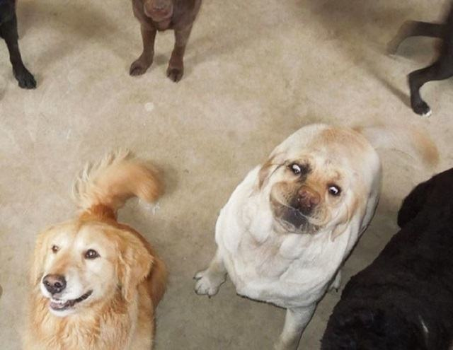 10 situações que você fez a mesma cara que esses cães