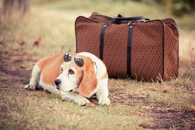 5 dicas para encontrar o hotelzinho perfeito para o pet nas férias