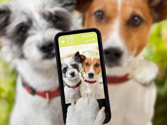 Aprenda como tirar as melhores fotos do seu cãozinho