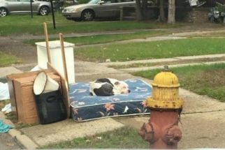 Família abandona cão durante mudança e ele passa um mês na rua