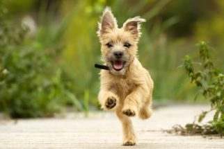 Os benefícios do tratamento homeopático em caso de epilepsia canina