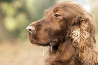 Entenda por que os cães se estressam e saiba como tratar isso