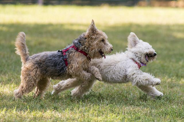 O equilíbrio mineral do organismo do cão é importante e o tutor precisa ser atento