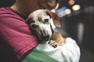 Cadela busca consolo no colo de voluntária após ser abandonada