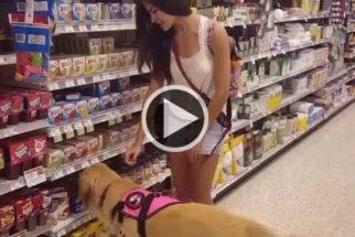 Cadela de serviço ajuda tutora com narcolepsia em tarefas diárias