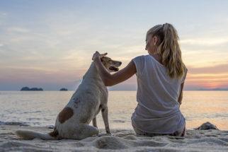 Toque na mama: veja como descobrir o câncer de mama nas cadelas