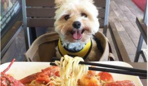 cao-faz-sucesso-ao-aparecer-sempre-bem-comportado-diante-de-comidas