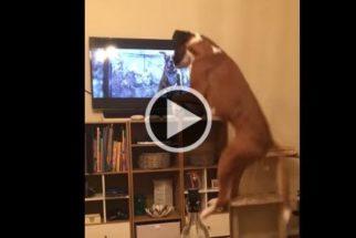 Cão tem reação hilária ao reconhecer espécie em comercial de TV
