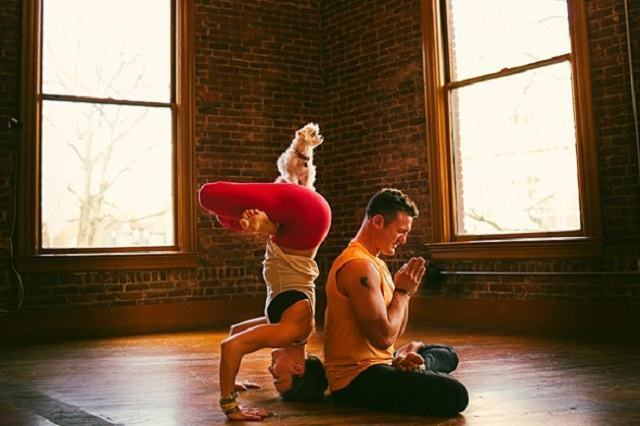 caozinho-zen-fazendo-ioga-com-seus-tutores