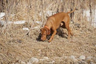 Coisas que os cães conseguem sentir pelo cheiro e os humanos não