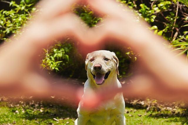Descubra as 6 coisas que todo cachorro faz por seu tutor