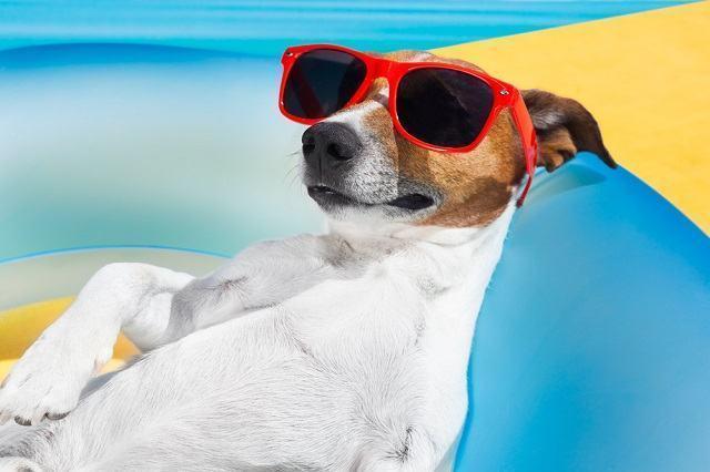 Descubra por que os cachorros adoram tomar banho de sol
