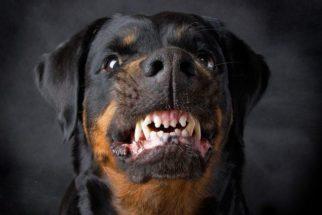 Dicas: se previna de agressividade e mordidas do seu cão