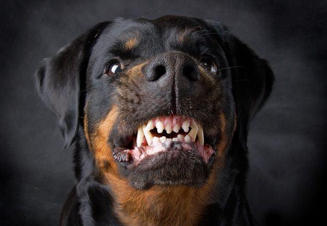 Dicas: se previna de mordidas e agressividade do seu cão