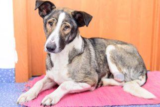 Conheça a displasia coxofemoral e saiba como tratar essa doença em cães