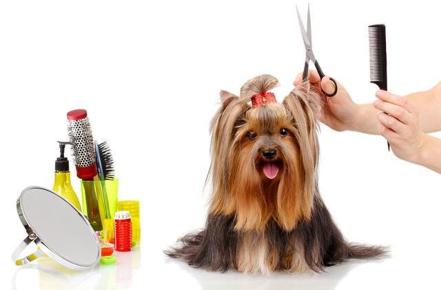 Escovando o pelo: saiba a forma correta de segurar o seu cachorro nesse momento