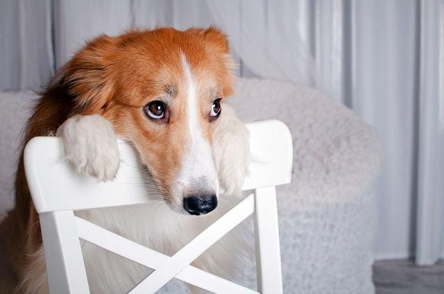 Escritora orienta em livro como estimular bons hábitos no seu cão