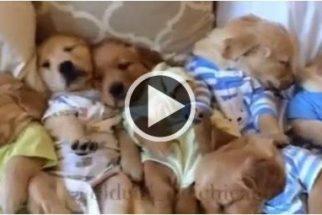 Esses filhotes dormindo juntos vão tornar seu dia mais fofo