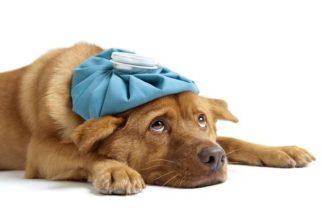 Gripe ou alergia: por que meu cãozinho espirra tanto?