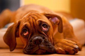 Não sabe se seu cachorro tem verme? Saiba como identificar