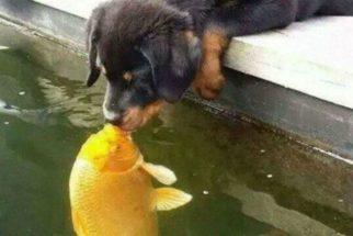 Foto de beijo entre um cão e um peixe viraliza