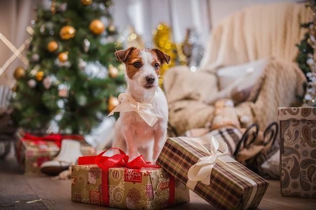 O presente perfeito para presentear o seu cão neste Natal