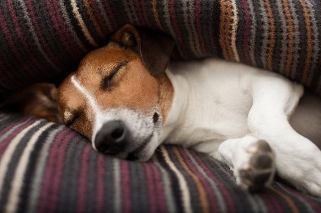Psicóloga acredita que cães sonham com seus tutores