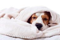 Quais os sintomas e como tratar a epilepsia em cães