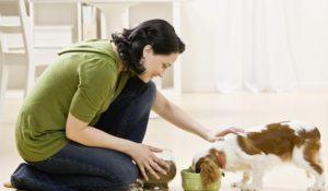 Woman feeding and petting puppy. Horizontally framed shot.