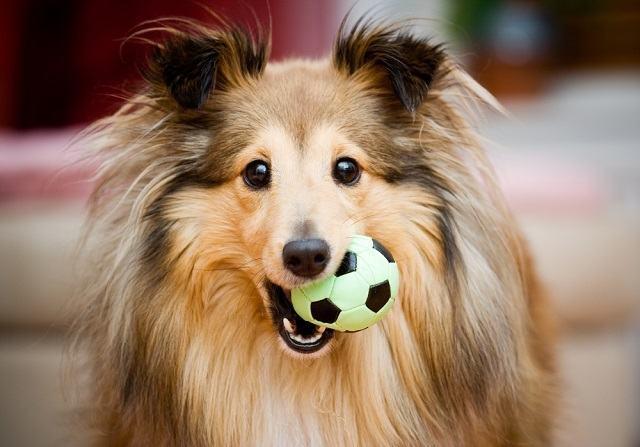 Sabia que existe a quantidade certa de passeios e brincadeiras para cães?