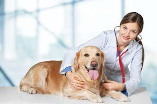 Sem estresse: veja como levar o seu cão ao veterinário sem drama