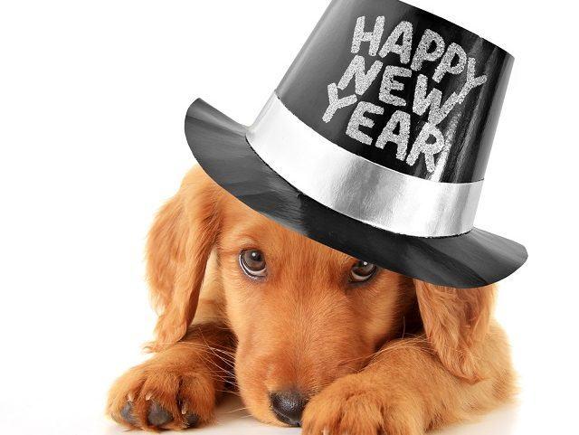 Treinar o cão antes do Ano Novo pode prevenir sustos com fogos