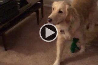Tutor se fantasia de brinquedo preferido de cadela. Veja sua reação
