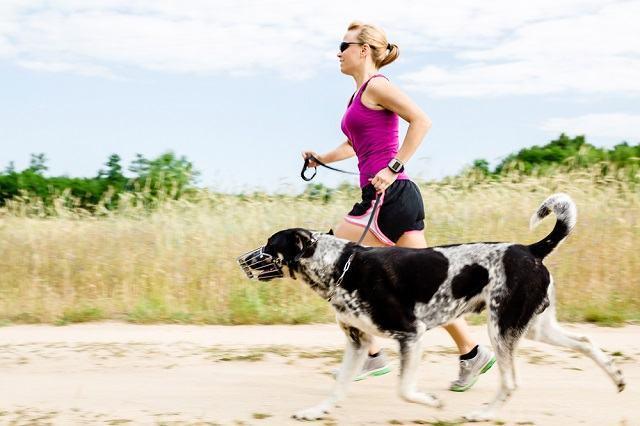 Veterinária dá dicas para exercícios com seu cachorro