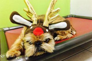 10 cães que estão completamente por fora do Natal