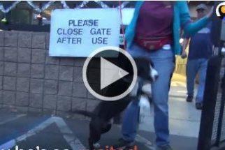 Cãozinho não consegue se conter e pula sem parar ao ser adotado