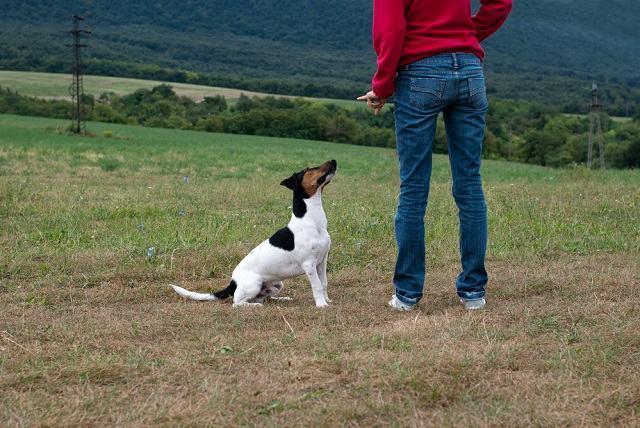 A importância da liderança e dos limites na criação do meu cão