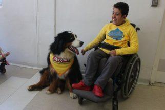 Em clima natalino, AACD receberá a visita do cão Magnus