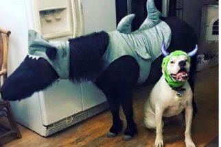 Amizade: pônei e cãozinho são amigos desde a infância