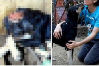 Após ser resgatado, cão com mutilação consegue se recuperar