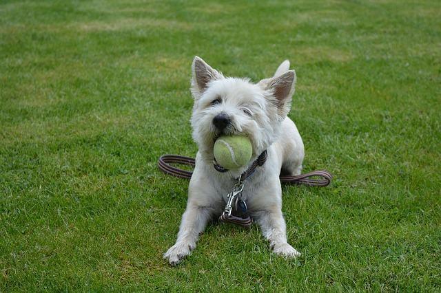 Aprenda a criar momentos diários divertidos para os cães