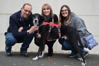 Após três anos em abrigo, cão é adotado graças a programa de TV