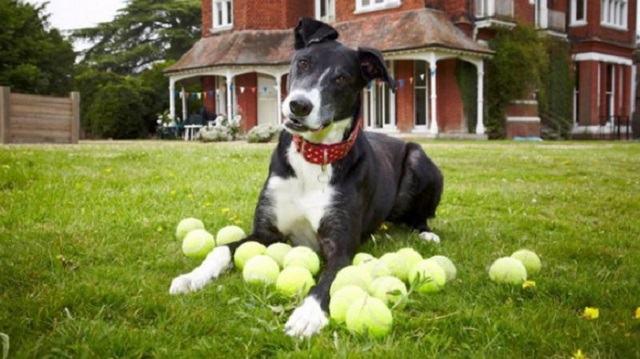 bud-o-cachorro-que-passou-tres-anos-em-um-abrigo