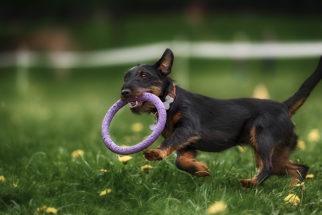 Para o cão é melhor jogos com brinquedos ou jogos com luta?