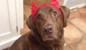 cachorro-com-tiara-de-chifres-para-halloween