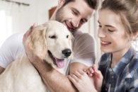 Diabetes em cães: conheça os sintomas e dicas para controlar a doença