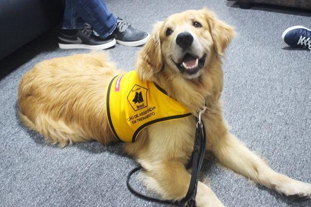 Cães de assistência: peludos levam qualidade de vida para pacientes