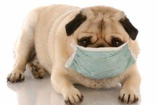 Cães podem ter alergias? Veterinária explica