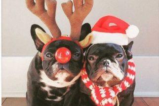Fofura natalina: cães vestidos para o Natal vão derreter seu coração