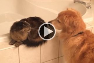 'Cães vs. gatos': esse vídeo retrata a convivência desses pets